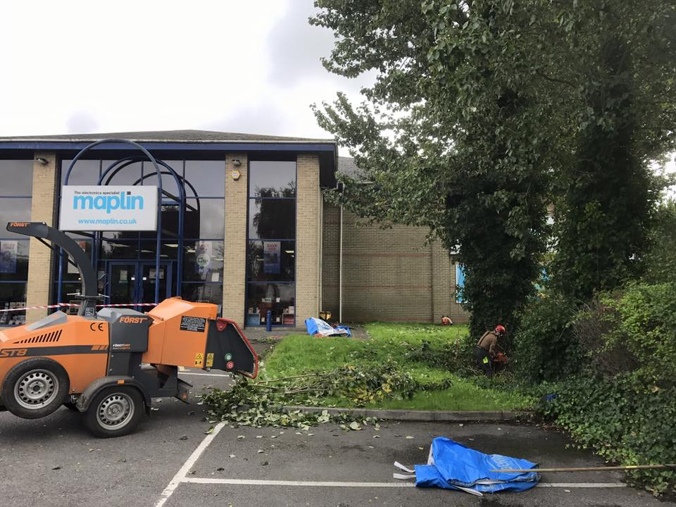commercial-tree-surgeons-in-salisbury