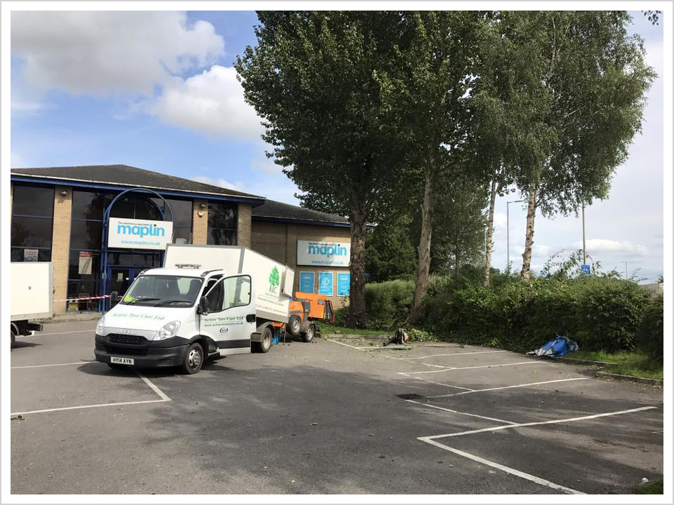 commercial-tree-surgeons-salisbury