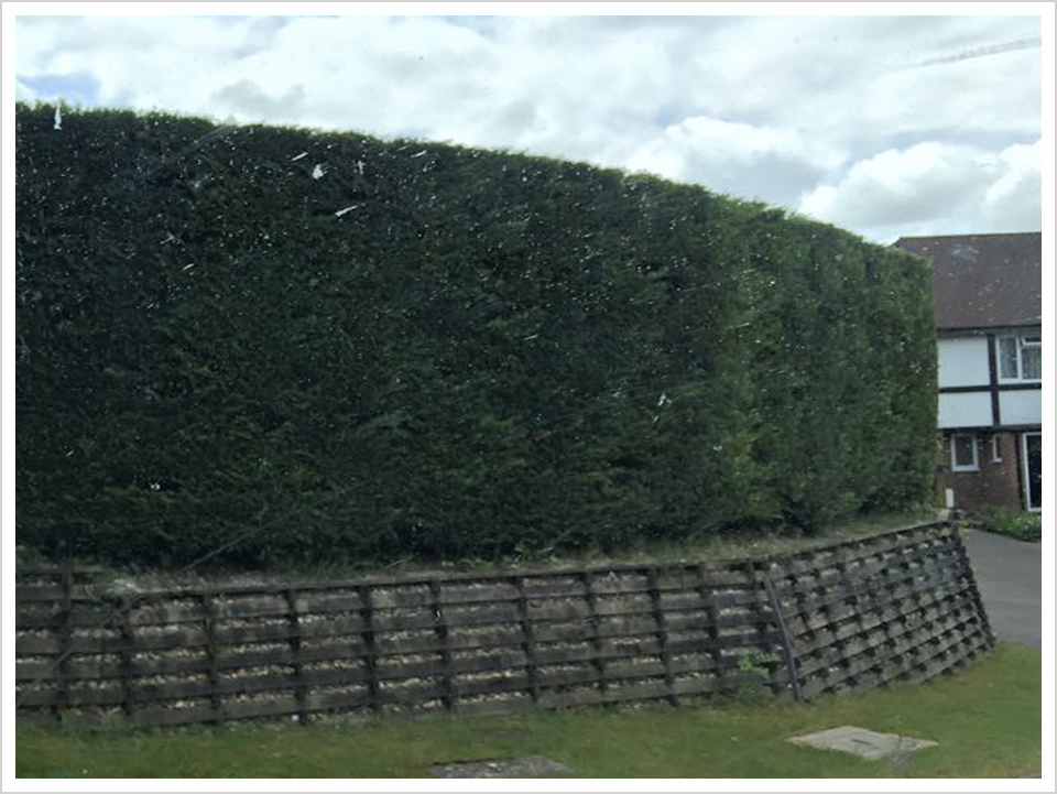 hedge-trimming-new-forest