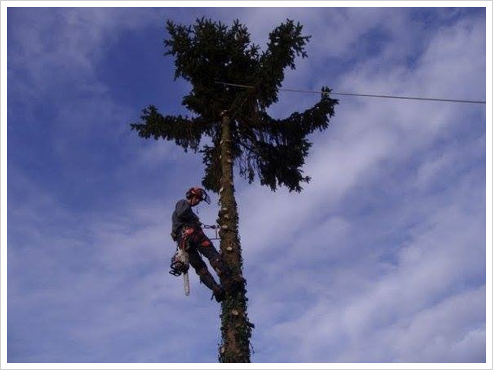 tree-surgeons-new-forest