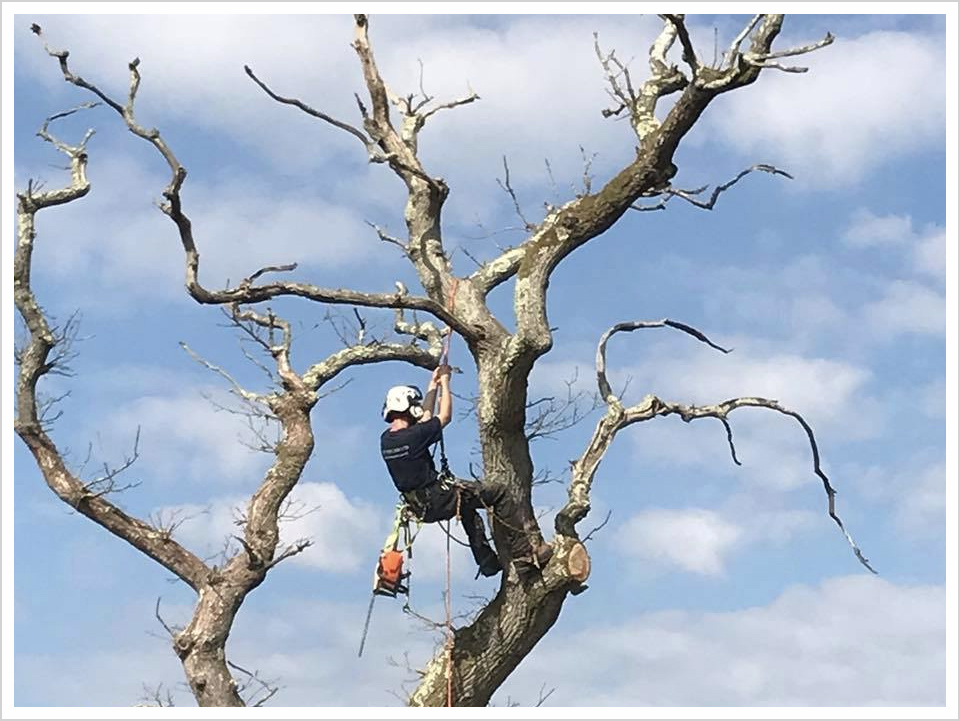 tree-surgery-in-new-forest