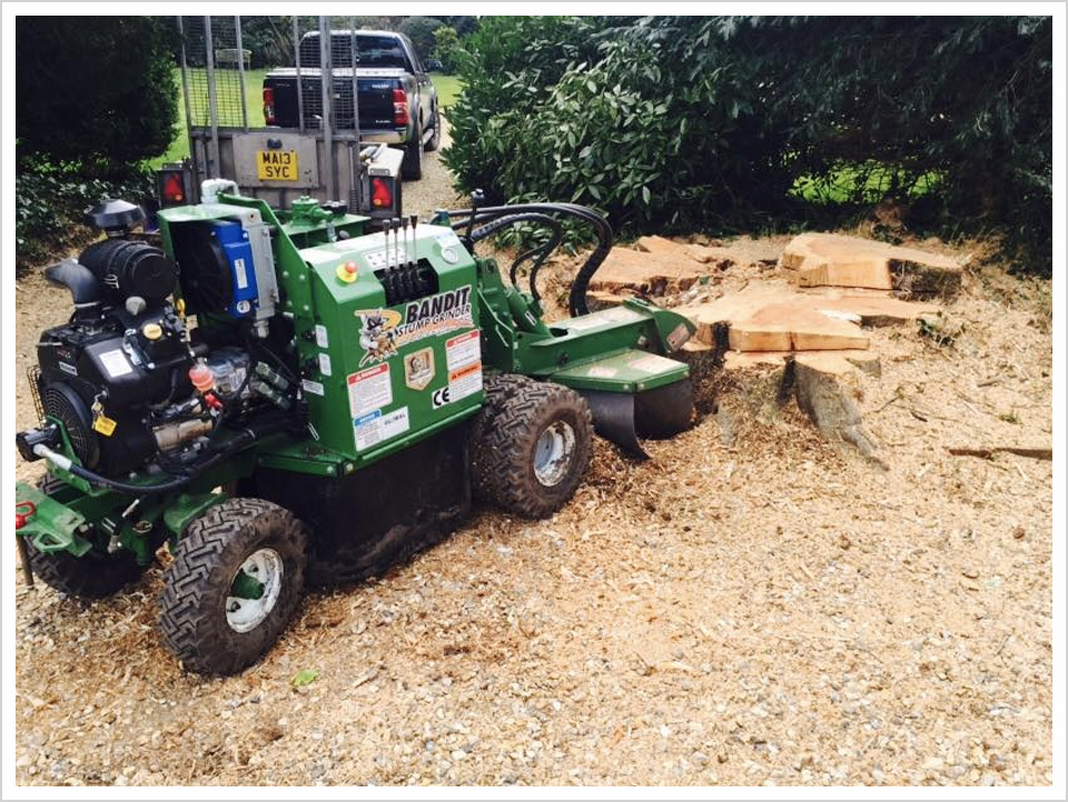 tree-surgery-new-forest